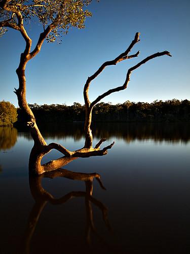 longexposure tree australia bw1000