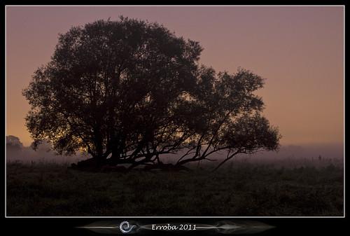 morning mist tree field grass fog canon belgium belgique belgië erlend mechelen beforesunrise 60d hetbroek erroba robaye