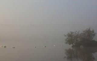 foggy swanisland