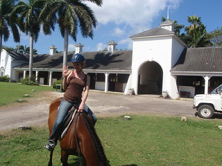 andrea arden dog training  jamaica  horseback riding