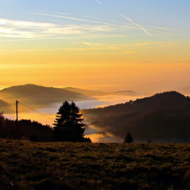 Evening in the Black Forest