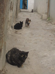 gangs of sousse