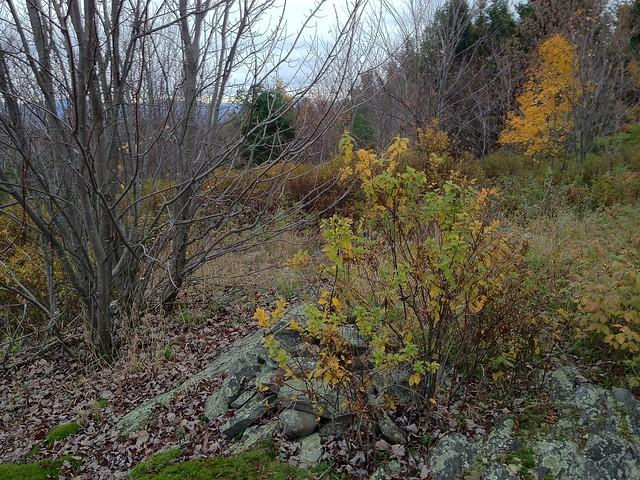 1:38:47 (60%): vermont hiking cairn fairlee crossrivendelltrail baldtopmountain