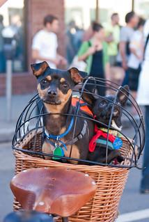 17687 Kay's two dogs in her rear basket   by geekstinkbreath