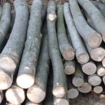 Chestnut Fencing Material