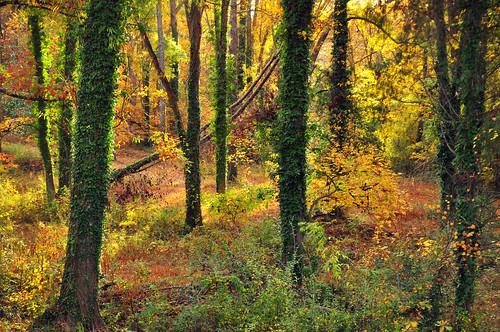 november trees sunset sun sunlight fall beauty forest landscape insane amazing october pretty autum south deep carolina change