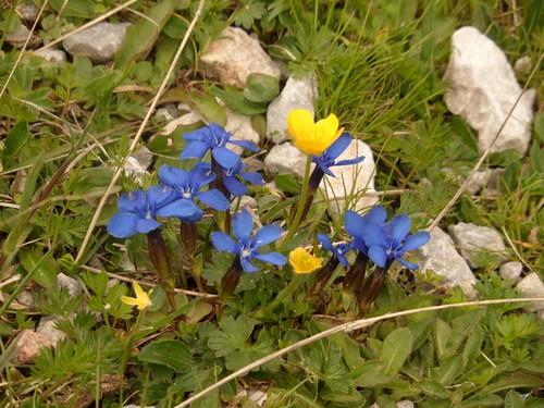 Alpin flowers   by Eva0206