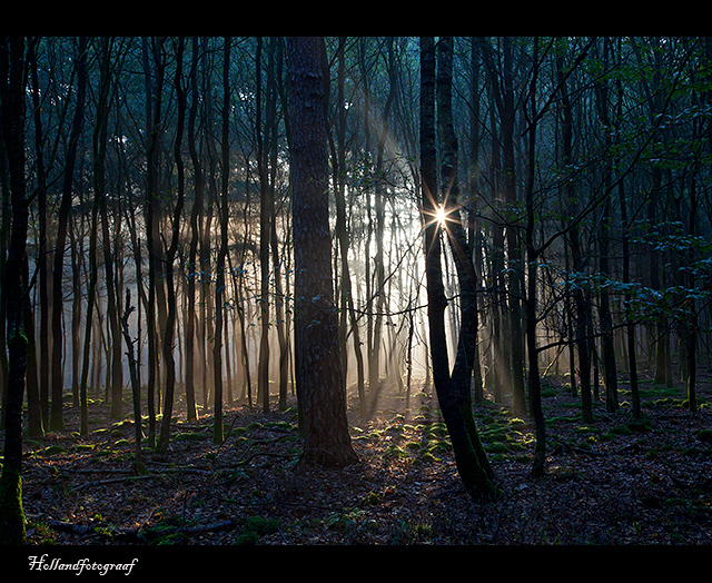 rays at the  forrest of the dancing trees