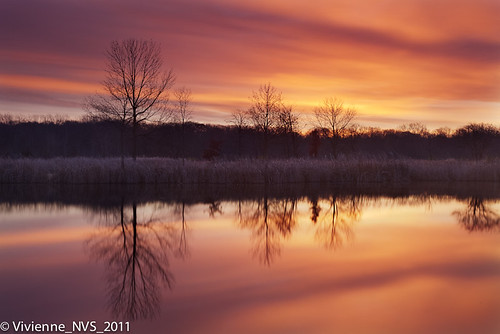 sunrise illinois preserves lakecounty halfdayforestpreserve lcfpd halfdaypond