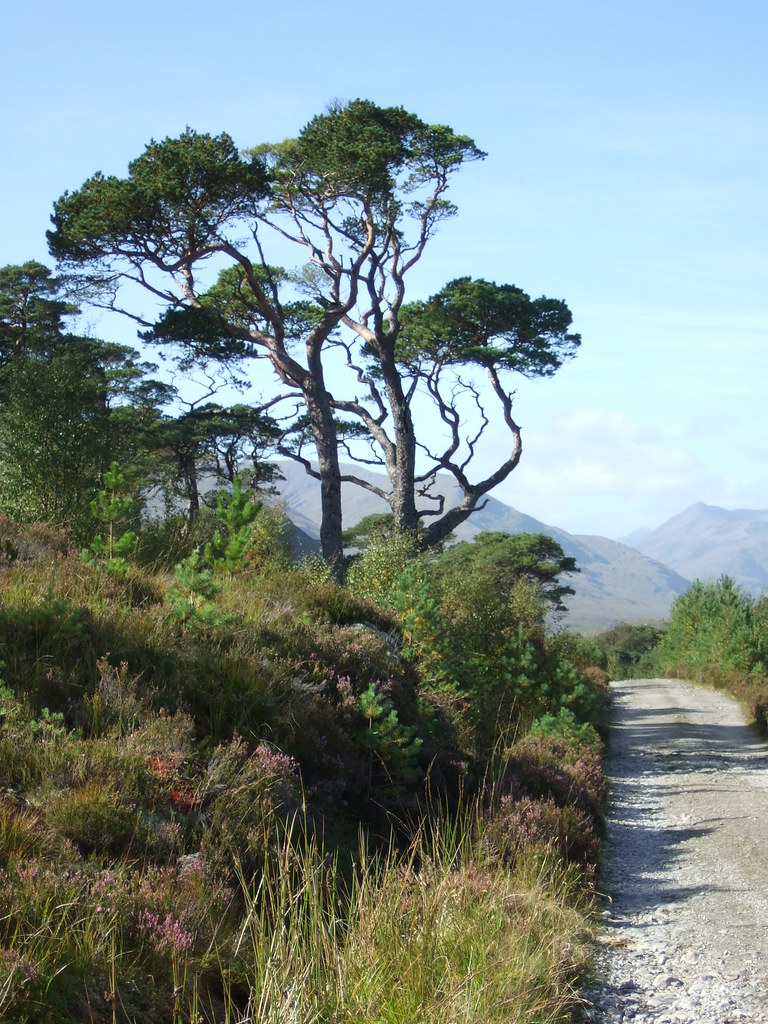 Close to Loch Affric