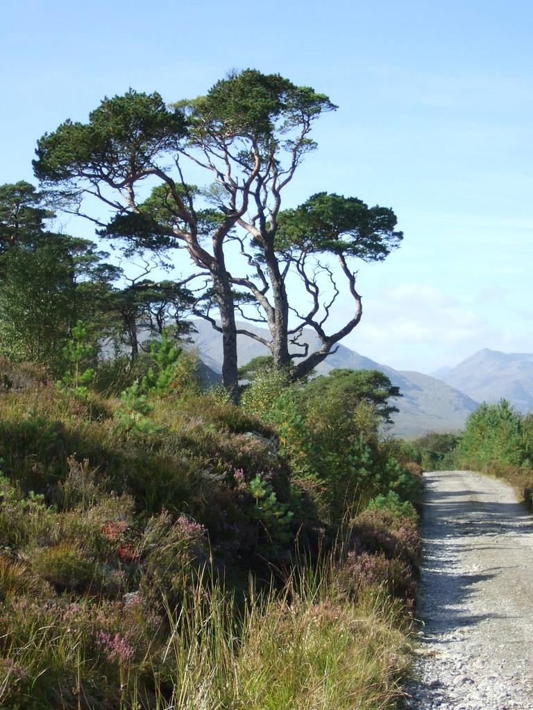 Close to Loch Affric