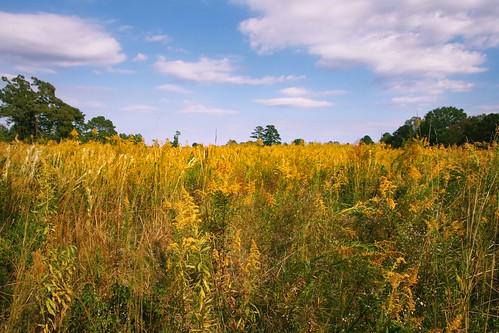 nature field yellow clouds rural landscape weeds louisiana seasons country pasture canonefs1022mmf3545usm mrgreenjeans gaylon 13mm goldenron alongpeairsroad gaylonkeeling