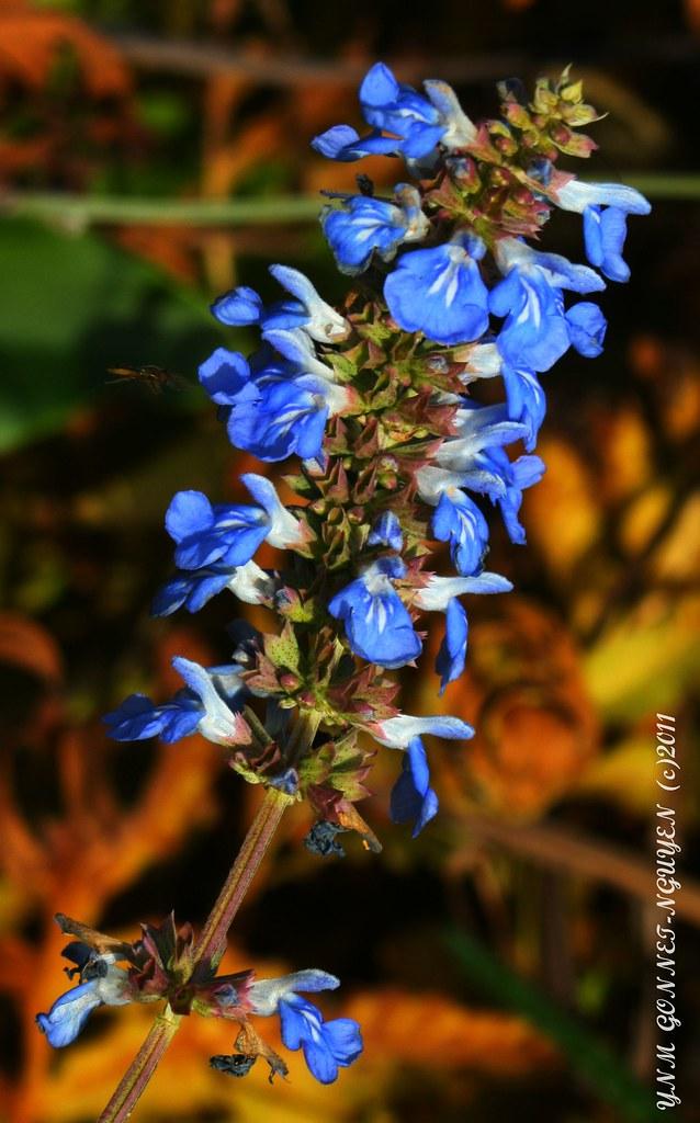 Fleurs et Fruits - Merveilles d\'Automne - Parc de Bagatell…   Flickr