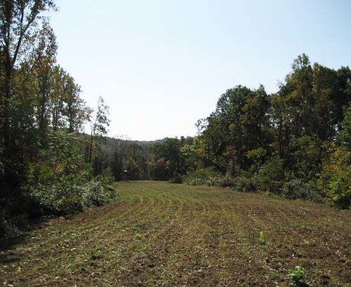 One of the landowner's well-maintained food plots.