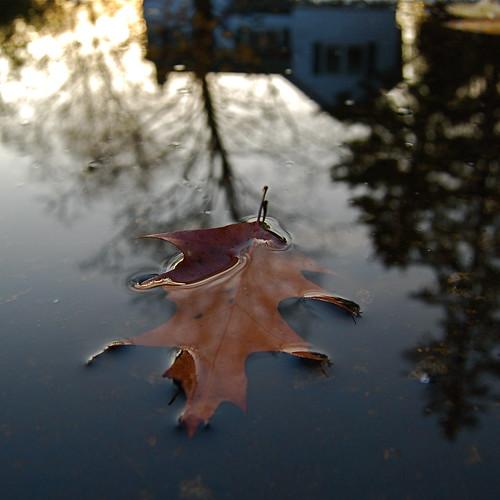 autumn sunset canada reflection water puddle photography nikon invertedimage squareframe leaffloating tomitheos rainforestink upsidedownimagery november152011