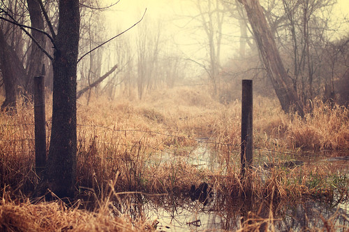 wood morning mist color reflection tree art fall nature water overgrown grass leaves fog rural photoshop vintage fence puddle dawn nikon midwest bright outdoor crossprocess rustic grain scene il cinematic filmgrain 70200mm d90 fauxfilm coldtone vintagecolors nikond90 bryanjaronik