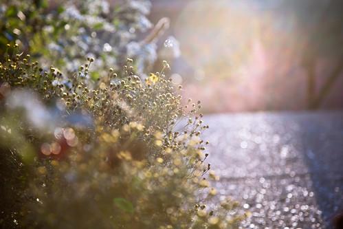 flowers autumn philadelphia bokeh sidewalk manayunk hss sliderssunday