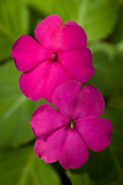 Tropical Gardens Of Maui 6504