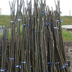 Bundled Sweet Chestnut rods