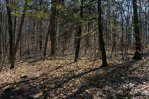 March woods at Bowman's Hill (Fern Trail) | by tgpotterfield