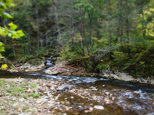 copyright nature river virginia woods allrightsreserved highlandcounty tiltshifteffect bullpastureriver mzuiko1442 dioramaartfilter ©daveelmore
