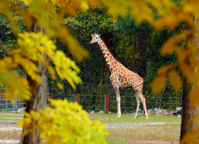 Riverbanks Zoo (1)