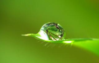 A drop of leaves on a leaf | by abdul / yunir