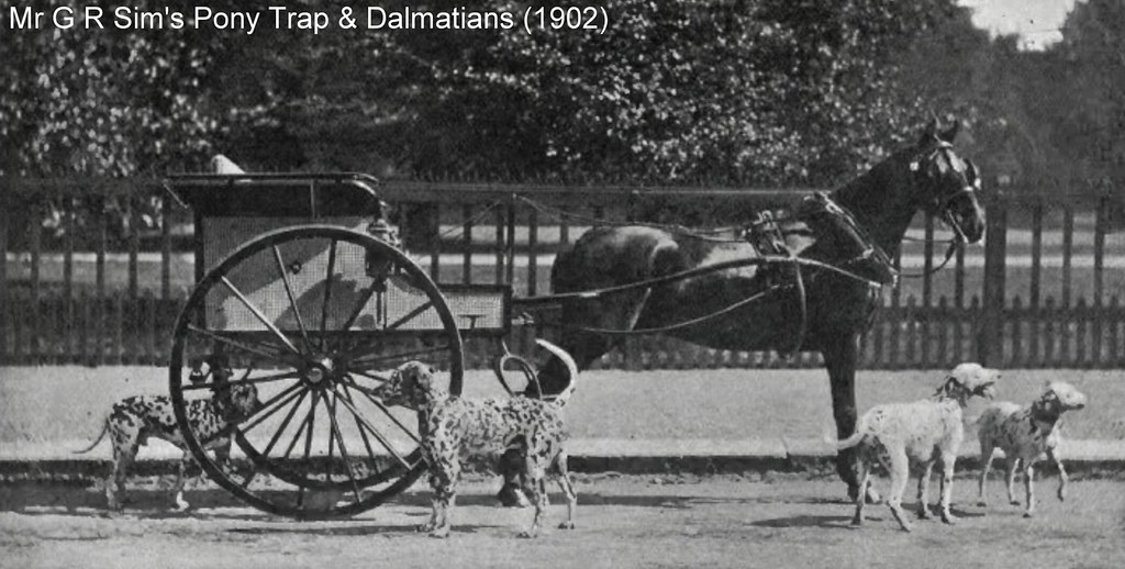 Dalmatians As Carriage Dogs | Early 1900s photos of Dalmatia… | Flickr