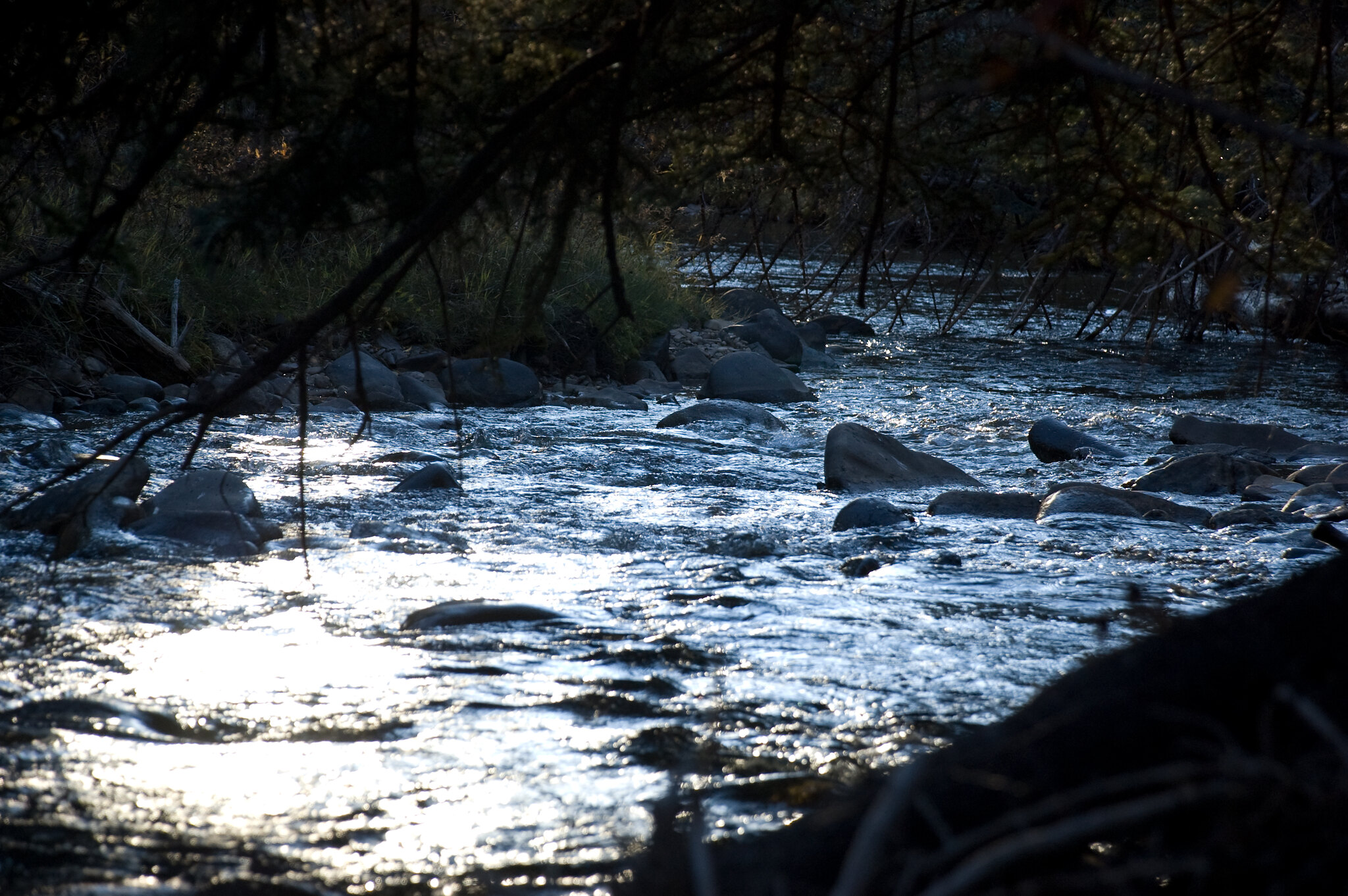 Fly fishing the Dolores River is getting to experience one of Southwest Colorado's best fisheries.