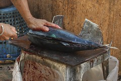 Tuna execution