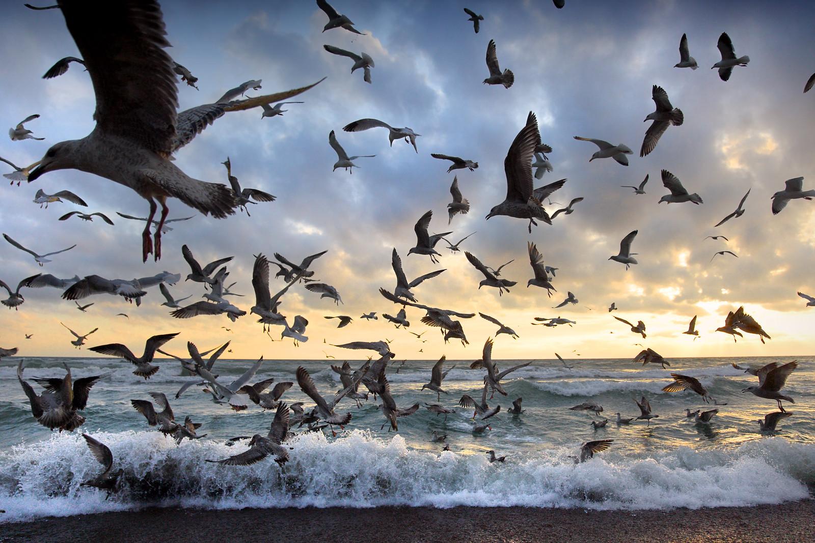 Feeding Frenzy on Brighton Beach - BEST VIEWED LARGE