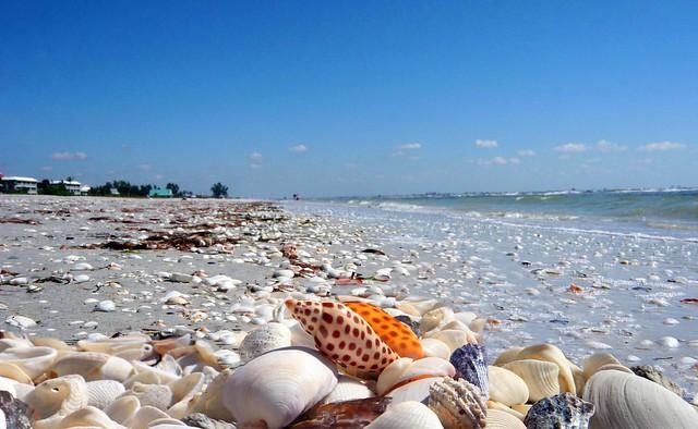 Sanibel Island Real Estate Shells Junoina