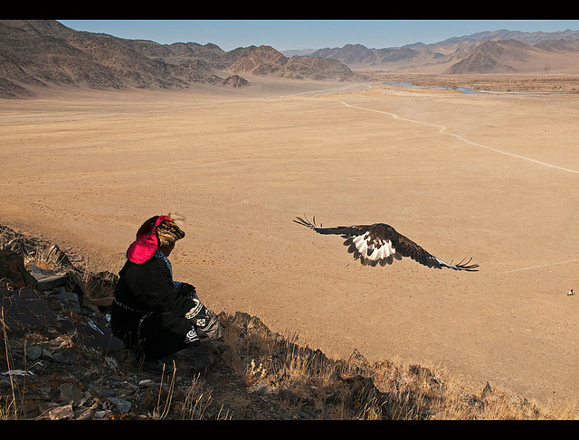 Kazakh eagle hunter sends out his golden eagle to fly in the Altai Region of Bayan-Ölgii in Western Mongolia