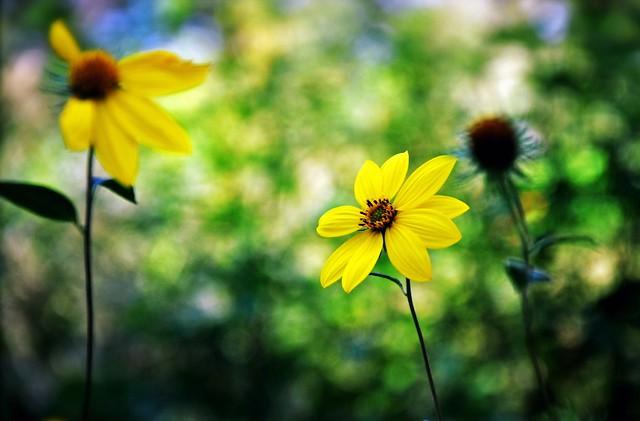 Central Park Blooms