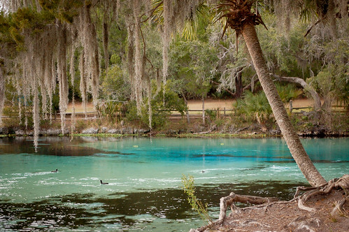 water forest spring underwater florida clear springs freshwater ocala silverglensprings
