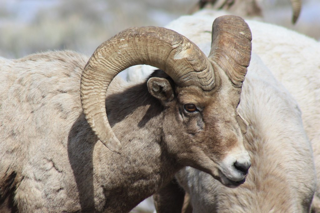 17 Animals with Incredible Horns That You Should See