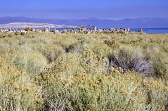 2011-10-15 10-23 Sierra Nevada 365 Mono Lake