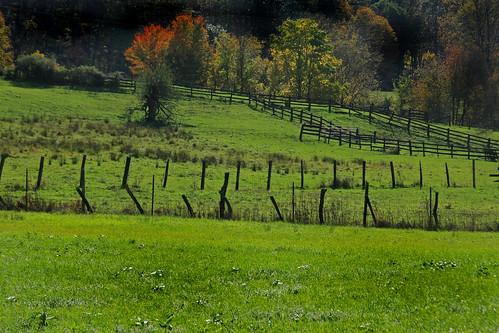 autumn fall fence scenery farm foliage pasture land
