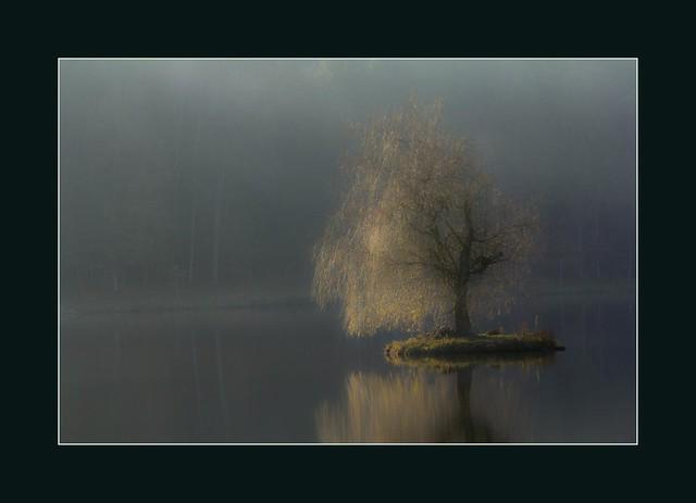 Herbstbaum...  (autumn tree...)