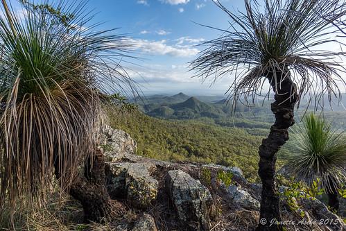trees mountain clouds landscape rocky australia ridge bushwalking qld queensland bushwalk ipswich grasstrees 2015 xanthorrhoea seqld flinderspeak flindersgoolmanconservationestate rhyolitepeak sonya7r