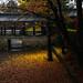 autumn carpet by [cipher]