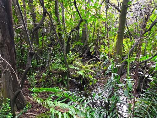 2017 potd plants cypresscreek fortlauderdale florida 700views