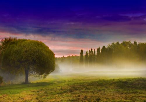 morning mist fog sunrise bestcapturesaoi elitegalleryaoi mygearandmebronze mygearandmesilver mygearandmegold mygearandmeplatinum mygearandmediamond aboveandbeyondlevel1 aboveandbeyondlevel2 aboveandbeyondlevel3