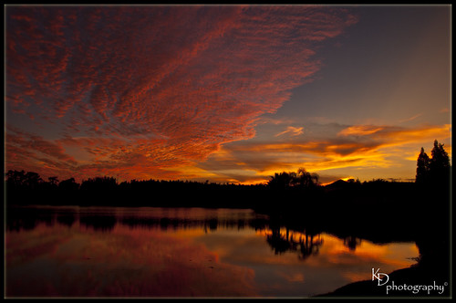 pink trees sunset orange sun lake reflection water yellow night clouds twilight nikon nikond90 wesleychapelfl aberdeenlakes