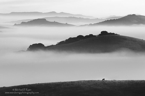 blackandwhite fog sunrise photography michael cow moody ryan marin sonoma hills petaluma marinmagazine wilsonhill michaelryanphotography