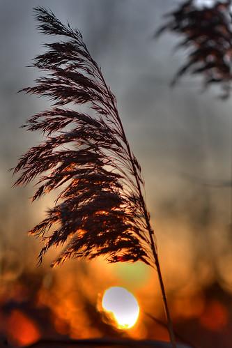 sunset newjersey nj edison shallowdepthoffield canonef100mmf28usmmacro oakridgepark