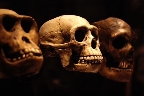 Trio of Skulls | by Lucy Bridges
