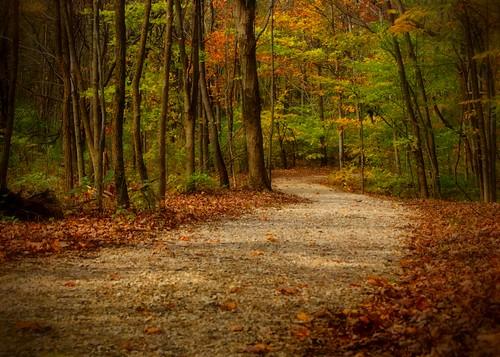 park autumn trees ohio nature leaves october path sony trail alpha metropark a230 2011 slaterun pickawaycounty slaterunmetropark
