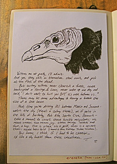 Turkey Vulture, page three