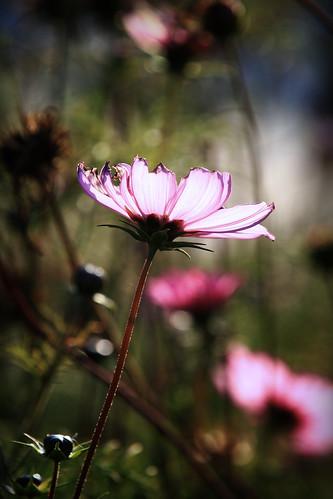 autumn sun flower nature canon eos poland polska natura 7d 70200 ef słońce jesień przyroda kwiat marcin colorphotoaward gawronski wonderfulworldofflowers